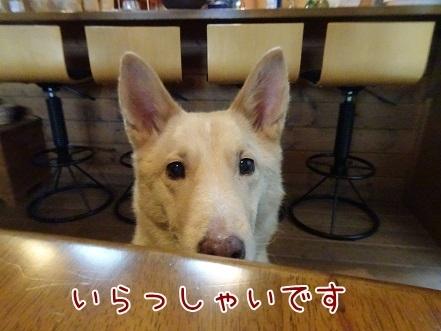 kinako8532.jpg