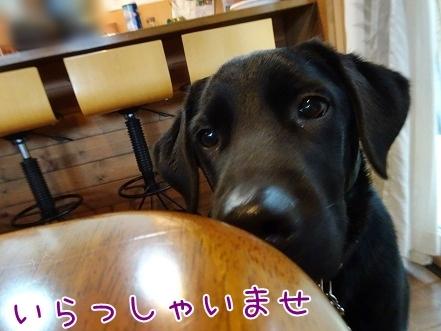 kinako8533.jpg