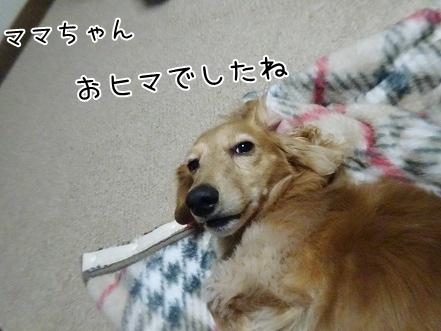 kinako8539.jpg