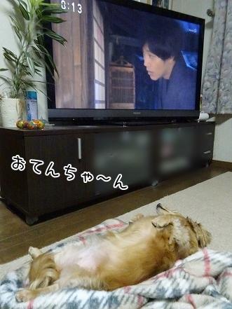 kinako8540.jpg