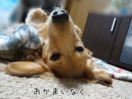 kinako8542.jpg
