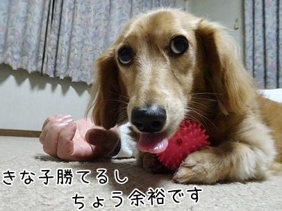 kinako8547.jpg