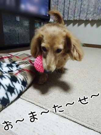 kinako8551.jpg