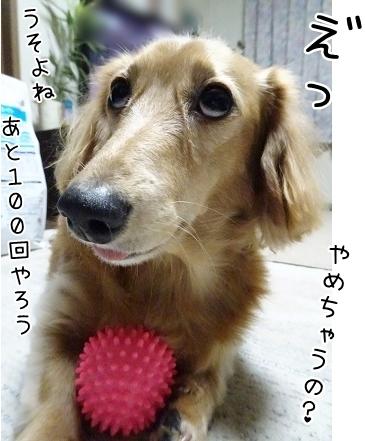 kinako8556.jpg