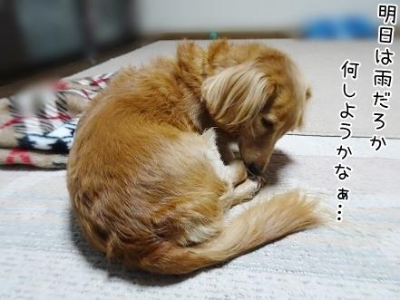 kinako8560.jpg