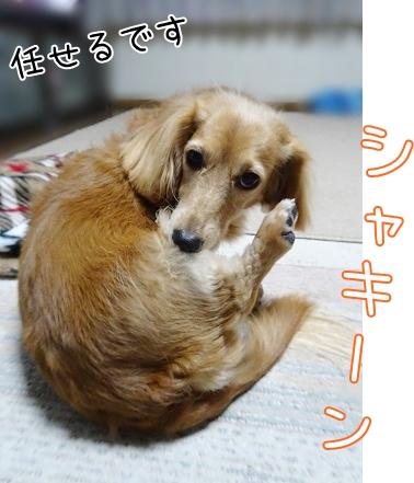 kinako8561.jpg