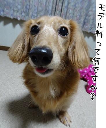 kinako8562.jpg