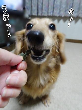 kinako8563.jpg