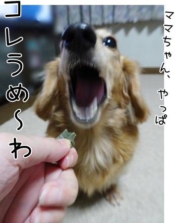 kinako8565.jpg