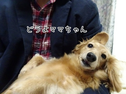 kinako8570.jpg