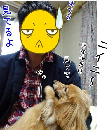 kinako8571.jpg