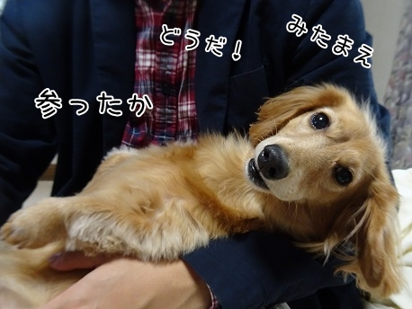 kinako8572.jpg