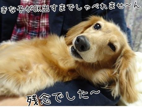 kinako8573.jpg
