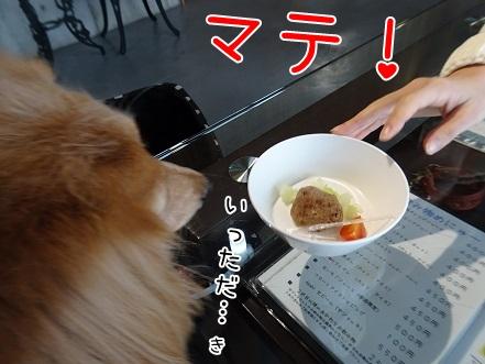 kinako8577.jpg
