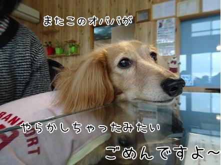 kinako8580.jpg