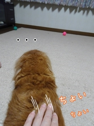 kinako8584.jpg