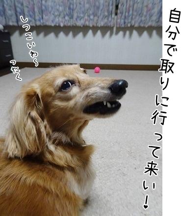 kinako8585.jpg