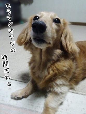 kinako8587.jpg