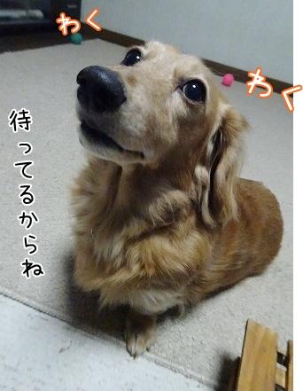 kinako8589.jpg
