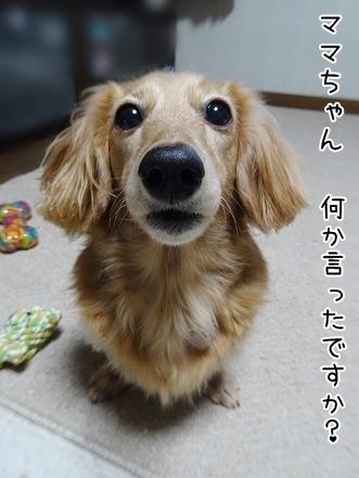 kinako8591.jpg