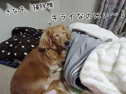 kinako8599.jpg