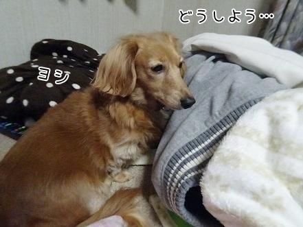 kinako8600.jpg