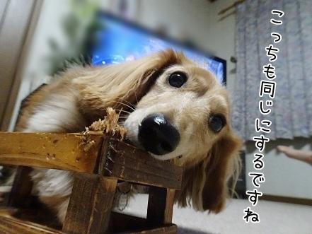 kinako8611.jpg