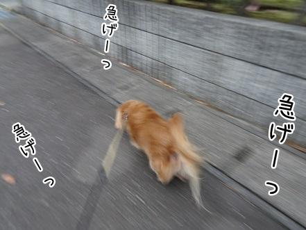 kinako8613.jpg