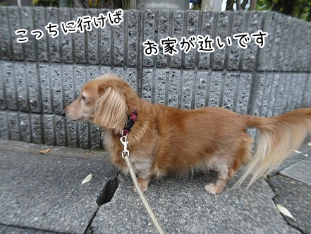 kinako8614.jpg