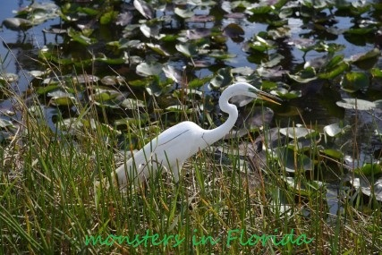 2019-01-19_Everglades (1) - Copy (Custom)