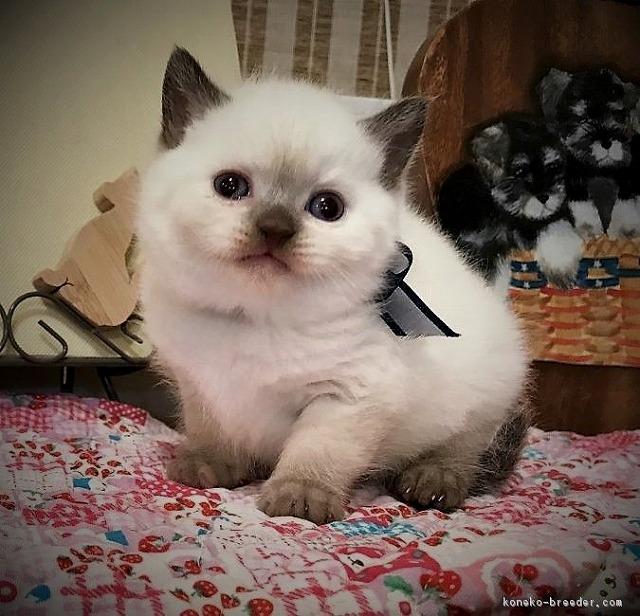 cat_img_1_fd06827b48d9[1]