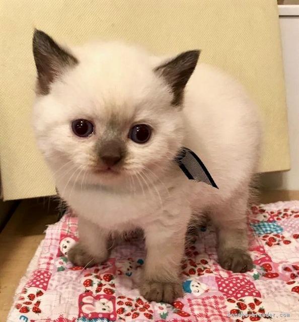 cat_img_2_49be8c4025e4[1]