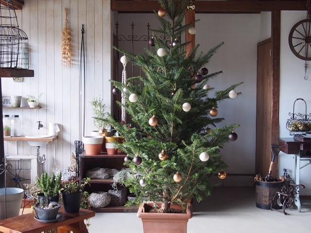 モミの木クリスマス