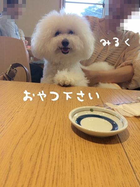 IMG_6252.jpg