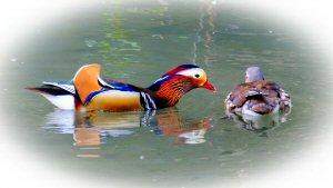01 300 tell me ducks