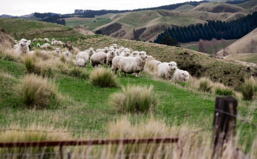 500 Newzealand rural landscape