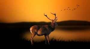 02 300 deer in fall