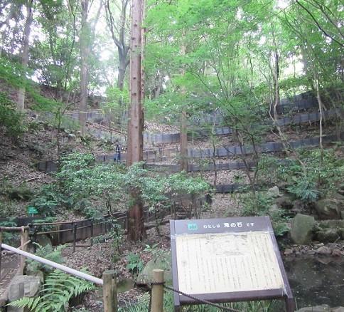 四季の森公園170516⑳⑤