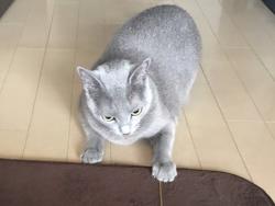JIJI291117.jpg