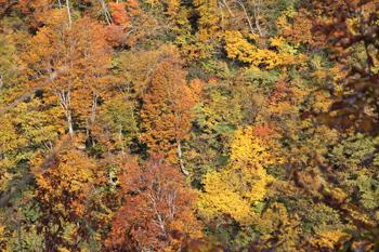 峰の木々の紅葉
