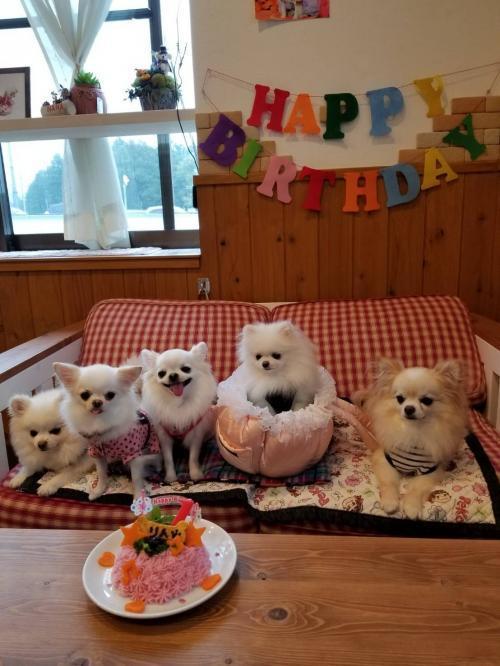 りん誕生日5ワンアップ02