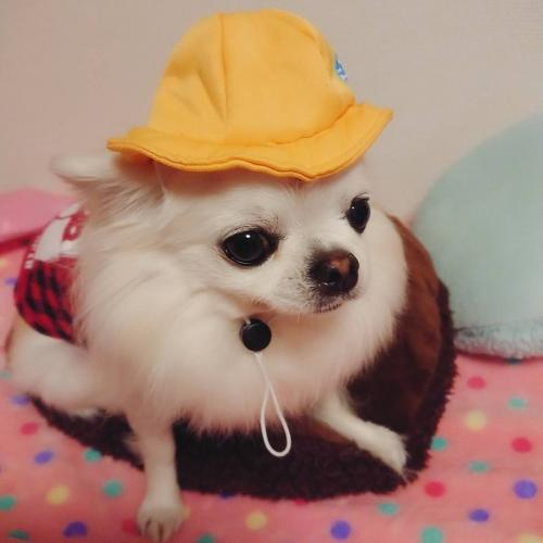 ルイ幼稚園帽子01