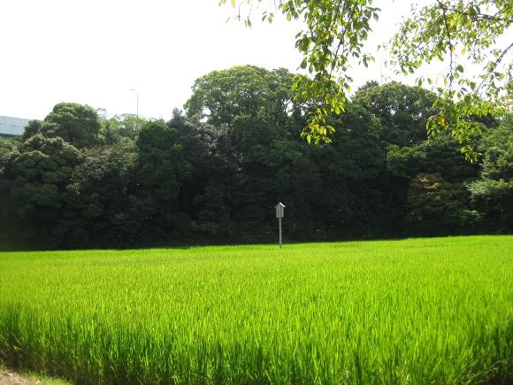 玉根社と大高斎田13