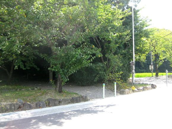 玉根社と大高斎田12