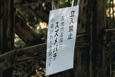_MG_3649suzumebatiA.jpg