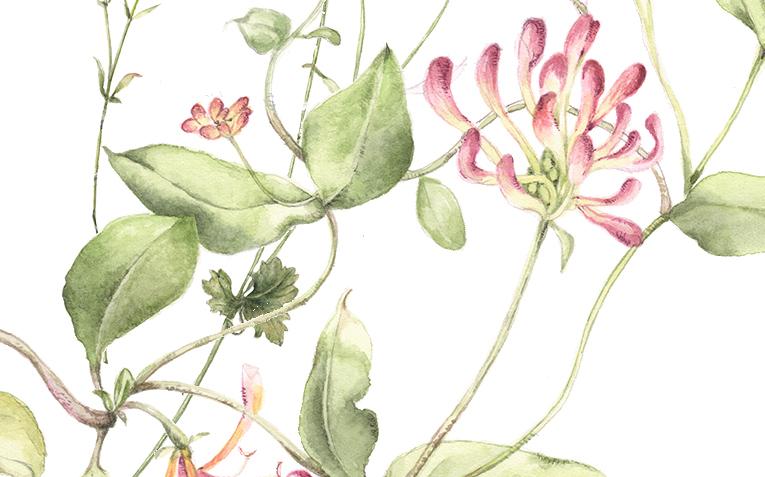 flower133a.jpg