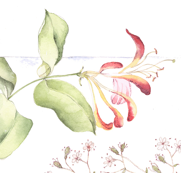 flower133a3.jpg