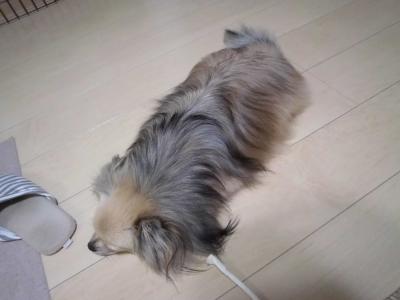 mop (2)
