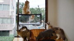 窓に張り付く猫ハンモック! その4 1