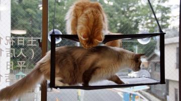 窓に張り付く猫ハンモック! その5 2